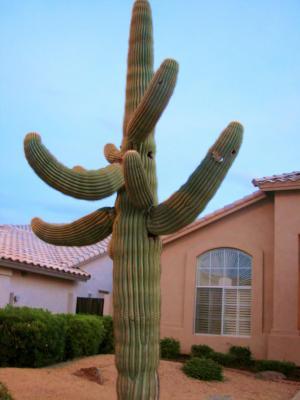 CactusCCLicense